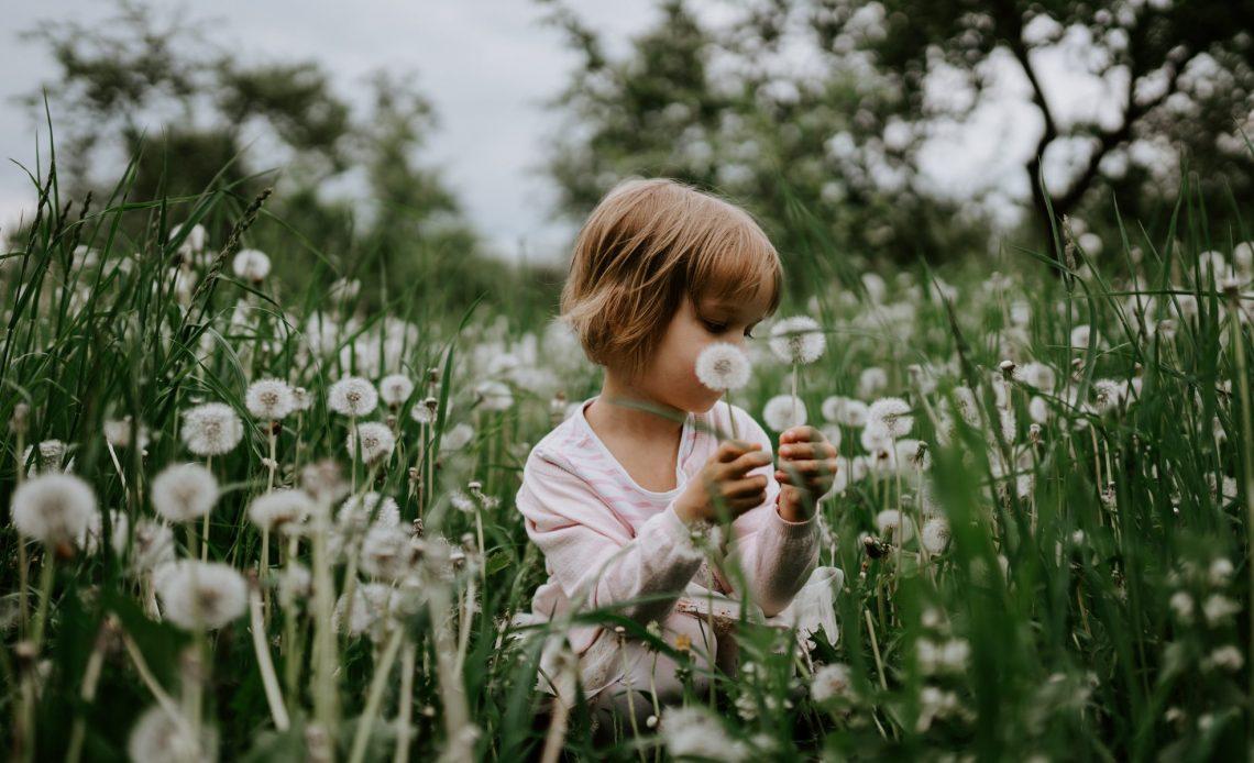 Pollenflug Asthma Allergie